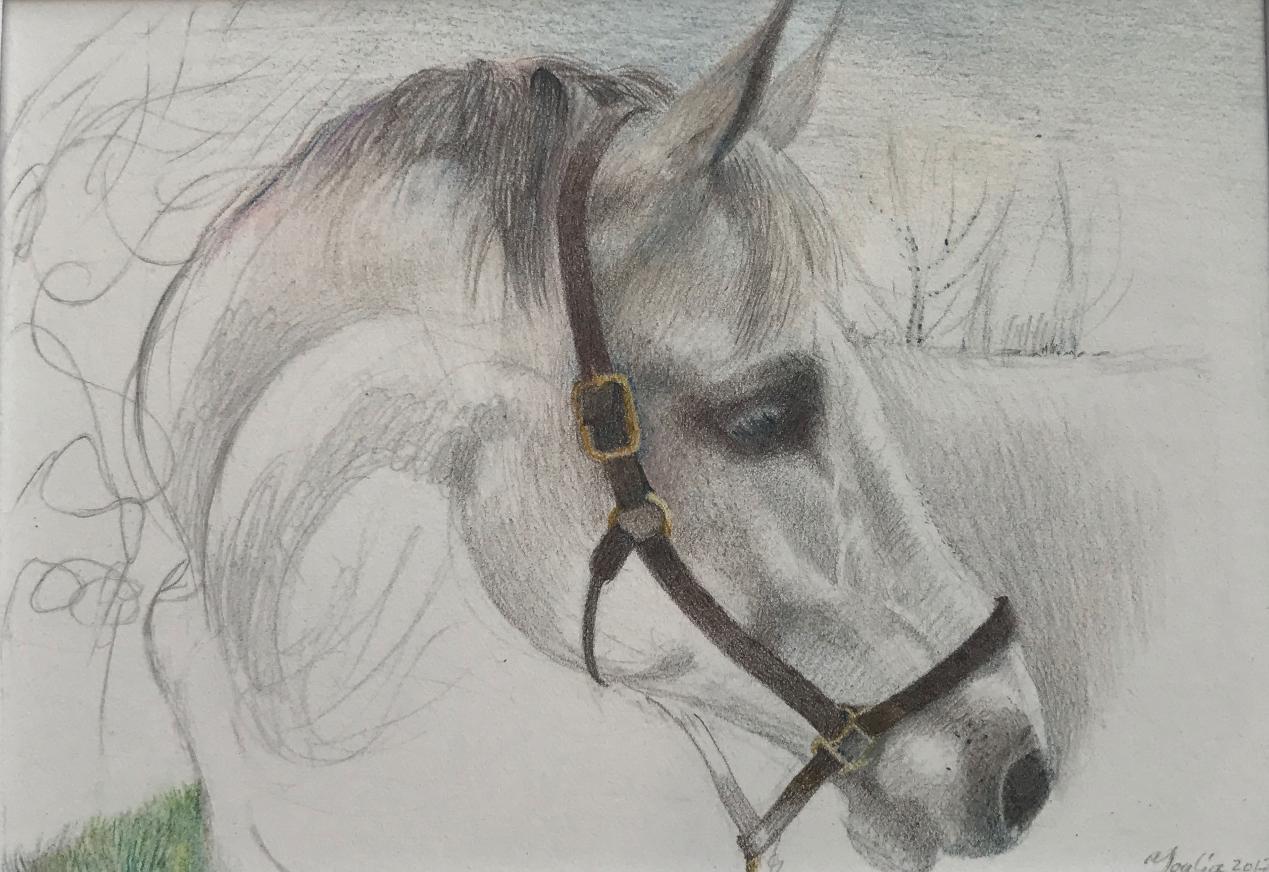 007 'Horse' Pencil Drawing